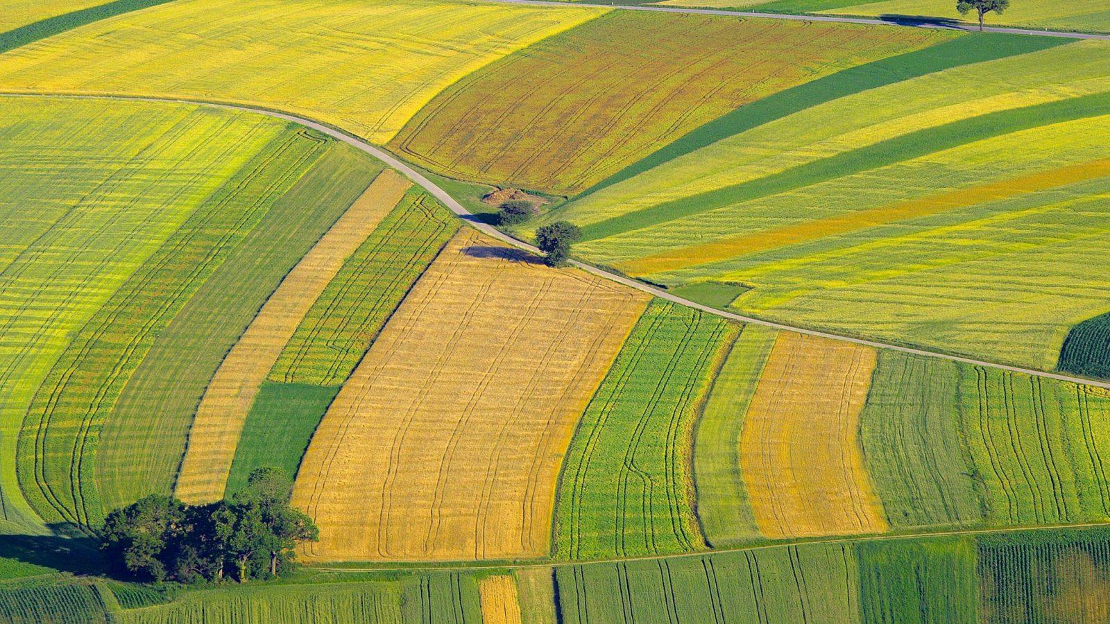 variety of crop fields
