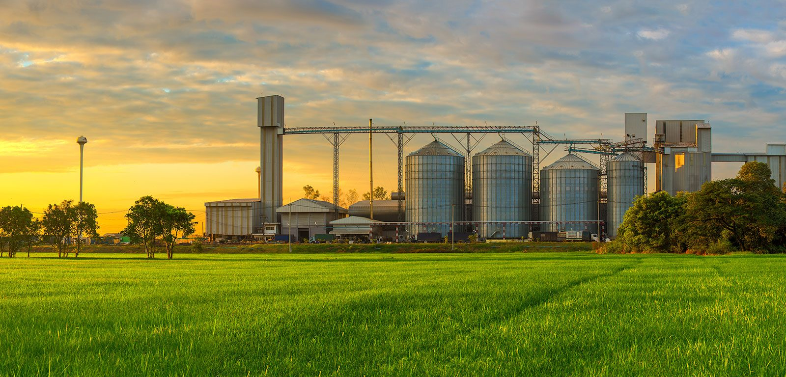 growing wheat field and grain silo at sunset