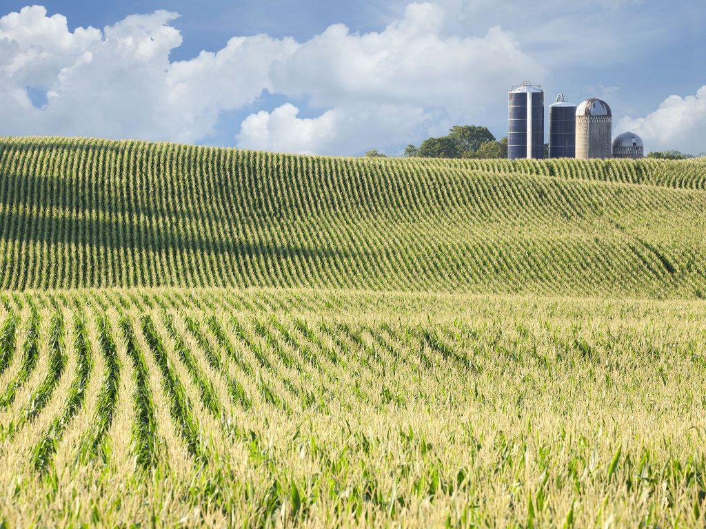 corn field and silos