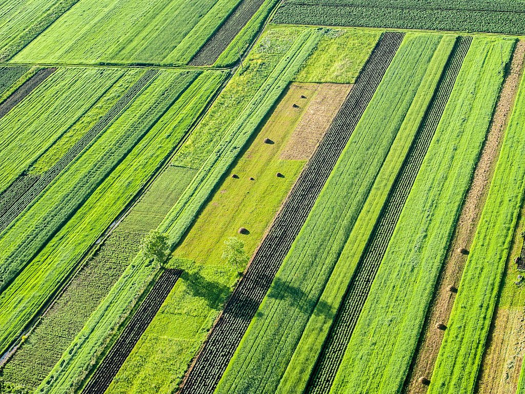 crops growing in the field will be harvested and exported
